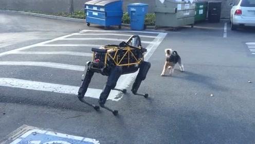 机器狗VS田园狗,科技与自然的较量