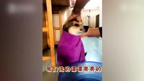 被逛吃打败的成精的狗狗