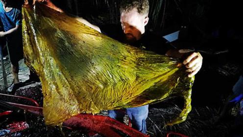 菲律宾海岸现喙鲸尸体 胃中塑料垃圾达38千克