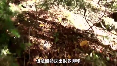 雷探长孤身探秘日本青木原树海,传闻一旦进入就无法出来是真的吗