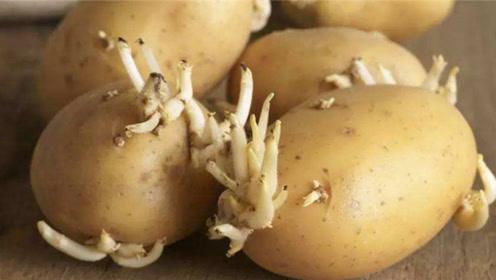 你家有发芽土豆吗,用途厉害了,现在了解还不迟