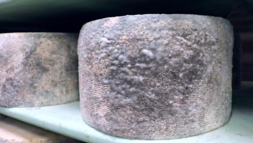 意大利发霉奶酪,霉斑成片覆盖切开臭气熏天,却是意大利最受欢迎美食