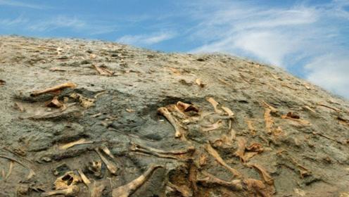 """科学家警告:第6次""""物种大灭绝""""来临!第一批受害者正在消失"""