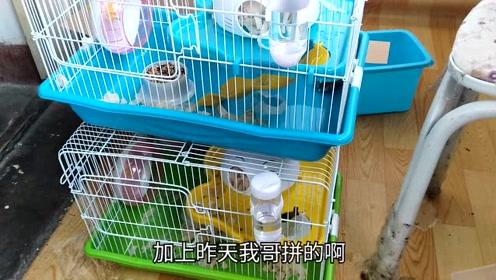 三哥连续开箱,三个猫头笼子,普通又好看,仓鼠很喜欢啊