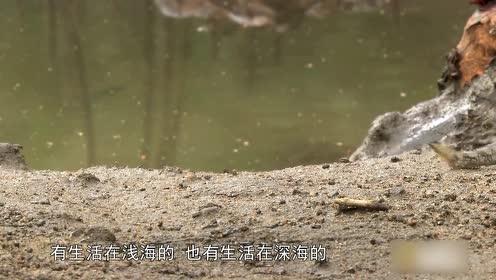不走寻常路!这种鱼,水里呆腻了,还想上树,你见过吗?