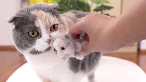 主人用猫毛做了一只猫,猫咪看到后一脸懵逼:这是我的崽?