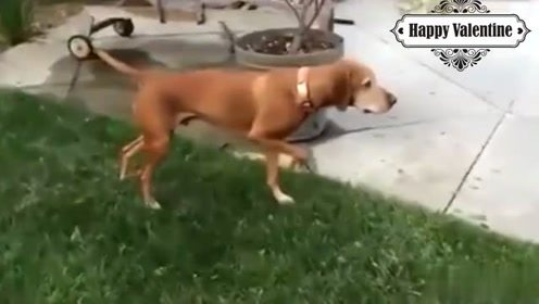 相信我,这条狗不是假的,真的是真的
