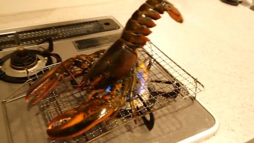 """鲜活的龙虾,日本人放到煤气灶上烧熟吃,龙虾:""""好烫"""""""