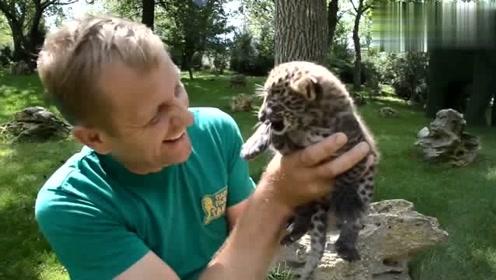 猎豹初次见到小猫咪,以为见面就会开打,没想露出的表情很又爱