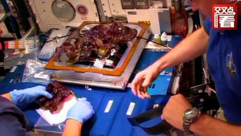 """太空志19:以菜代酒!宇航员兴奋吃下第一片""""太空生菜"""""""