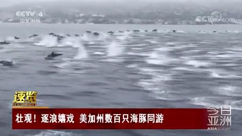 壮观!逐浪嬉戏 美加州数百只海豚同游
