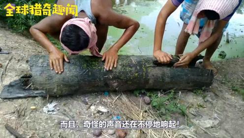 俩男子水里捞起一根大树桩,树里响声不断,挖开这才发现赚大了!