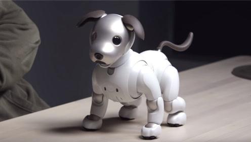 这条机器狗,被称为现有机器人最聪明的,还能跟人类对话!
