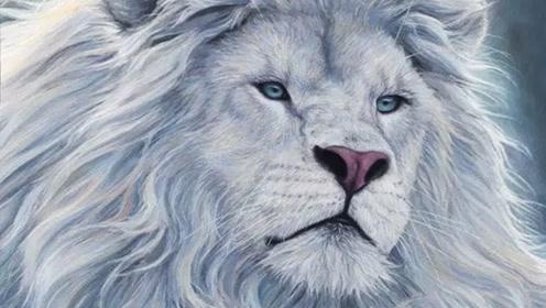 世界上最美的动物