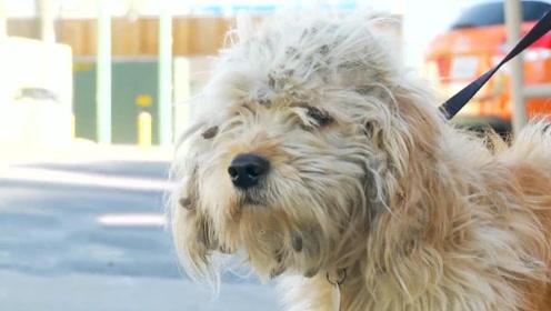给无家可归的流浪狗做个美容,一点也不比宠物狗差!