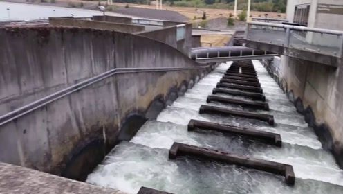 为帮助鱼群越过大坝,工程师想出妙招,究竟是如何做到的?
