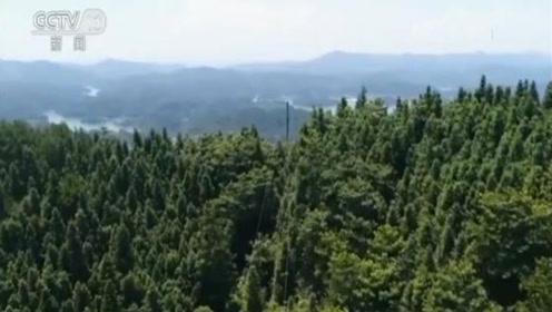 我国天然林保护将实行最严格监管