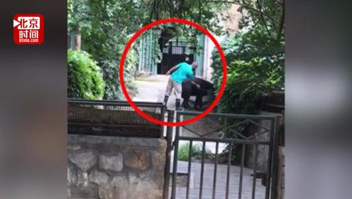 饲养员持棍抽打中美貘赶其回笼 北京动物园:将加强职工管理教育
