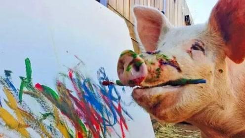 """猪界的""""毕加索"""",一幅画卖20000元?网友:人不如猪!"""
