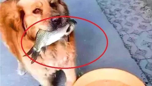 狗狗每天带回条大鱼,男子暗中跟踪大吃一惊,这狗成精了不成