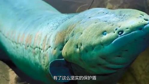 让人闻风丧胆的食人鱼,你知道它的天敌是什么吗?不是电鳗