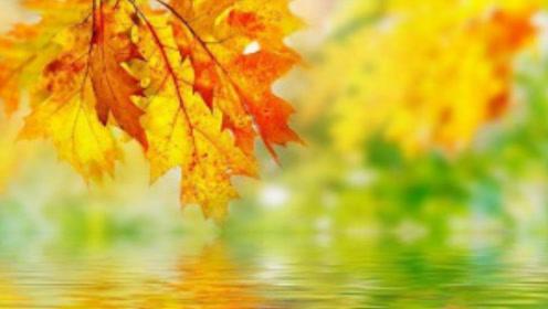 秋燥最伤的内脏竟然是它!去秋燥应该吃什么