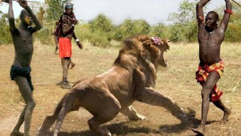 为什么狮子看到非洲马赛人,立马拔腿就跑?看完你就知道了