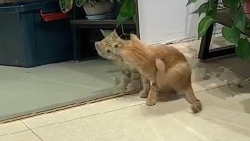 橘猫无意间照了下镜子,结果搞笑了