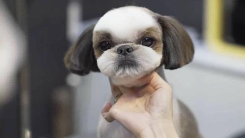 狗狗的毛太长挡眼睛,主人没办法,只能忽悠它去配种才把毛剃了