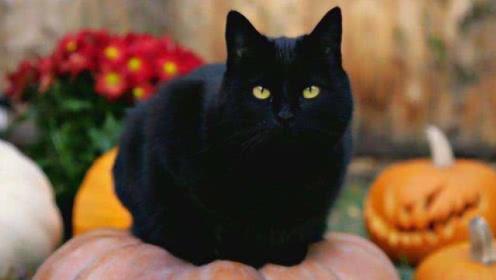为何农村老人说黑猫能通灵,绝不能让它靠近尸体?解释竟然很科学