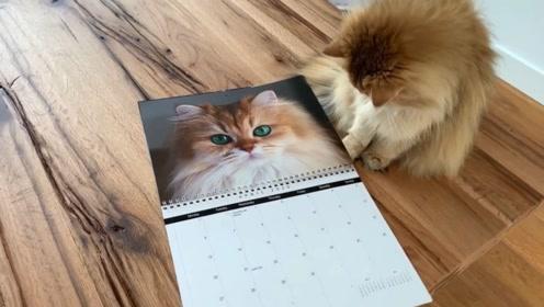 当猫咪看到日历中的自己会怎么样?这猫咪还真是可爱呀