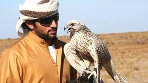 迪拜土豪才玩得起的宠物,一只单价上百万元,太威风了!