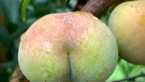 切开一个李子,看到这样的果肉,真想咬一口尝尝,真是太有食欲了