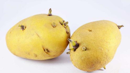 吃发芽的土豆会中毒?厨房中2种发芽蔬菜,最好都扔掉