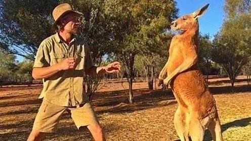 袋鼠用柔术大招锁住了狗头,结果狗主人来了一拳打懵袋鼠