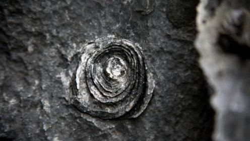 """广西深山现""""石头开花""""奇观,几十年开一次,世间难见"""