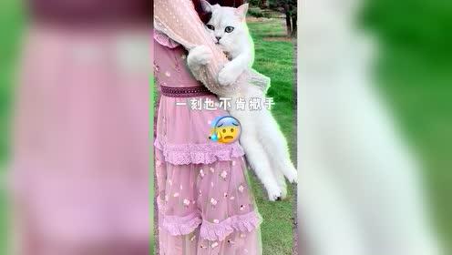 """一年""""四季""""带猫出游猫的状态,美女:家里家外两个样!"""