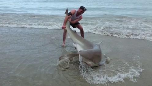 """男子""""徒手""""捕猎鲨鱼,镜头拍下全过程,鲨鱼:我不要面子啊?"""