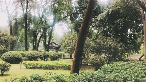 """天河公园逐步复绿,景观美好,正适合约""""跑"""""""
