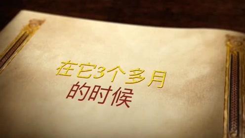 """""""十一""""来武汉动物园看企鹅宝宝,这里有一份它们的成长日记!"""
