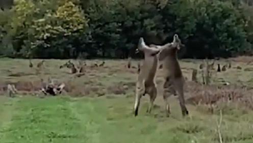 """""""有人在拍我们""""""""别管他,我们继续打啊!"""""""