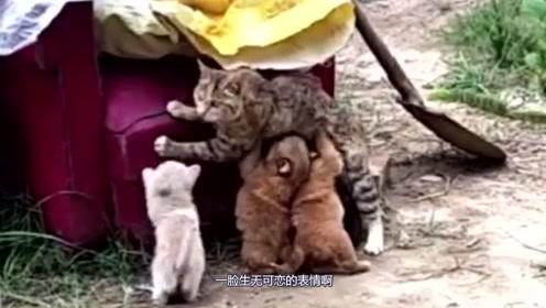 """猫咪:你们找错""""人""""了!汪星人:有奶就是""""娘""""!"""