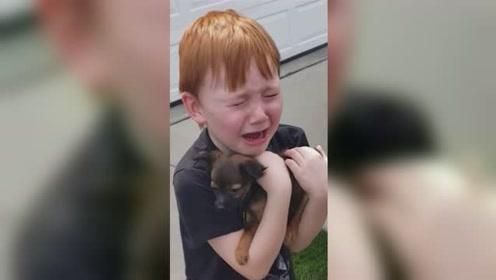 暖心时刻!6岁男孩攒钱18个月想买狗,提前收获惊喜爆哭