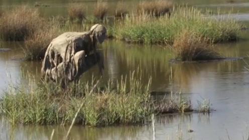 """女子在河边散步,发现一只""""怪物""""在喝水,镜头记录怪异画面"""