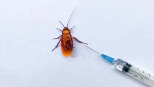 为什么叫打不死的小强?将农药注射进蟑螂体内,下一秒不可思议!