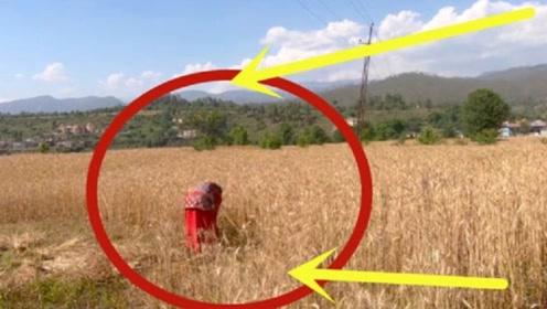 镜头直击印度收麦子现场,没我们想的那么落后,但也是咱玩剩的!
