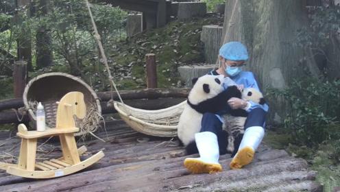 奶爸给熊猫喂奶,另一只屁颠屁颠地跑过来,镜头记录搞笑画面