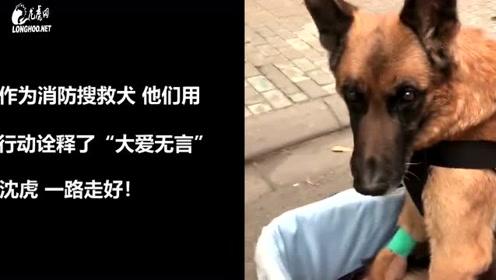 """送别无言的战友 汶川地震搜救犬""""沈虎""""去世"""