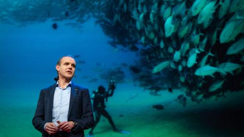 TED:禁止捕钓十年,荒芜海域的生态恢复如同奇迹