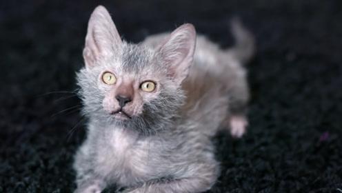 废弃住宅区疑似发现狼猫,狼猫真的存在么?外国男子前去一探究竟